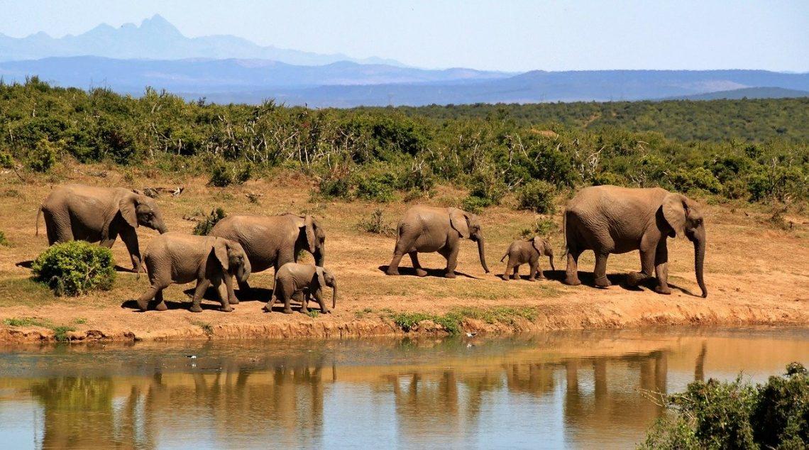 Où partir pour un voyage en Afrique?